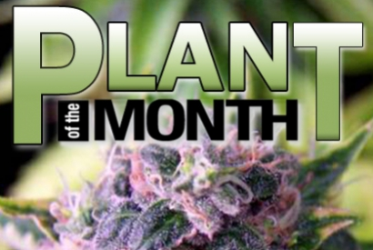 Plant of the Month